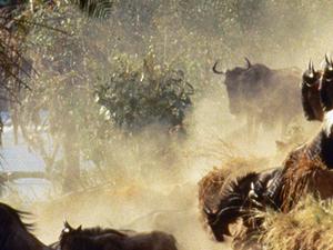 Masai Mara Group Joining Safari Photos