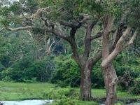 Yala National Park04