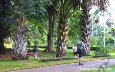 Ceylon Island Travel Kandy Day Tour Peradeniya Botanical Garden2