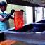 Ceylon Island Travel Kandy Day Tour Batic Factory