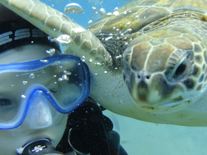 Try Your First Dive in the Shalow Lagoon in Tenerife