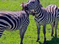 Tanzania Budget Safari 5 day