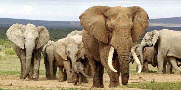 Photographic Safaris in East Africa Photos