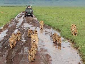 Tanzania Standard Safari - August 2017