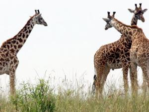 Best of Kenya Holiday Safaris Photos