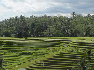 Mountain Trekking in the Ricefields Photos