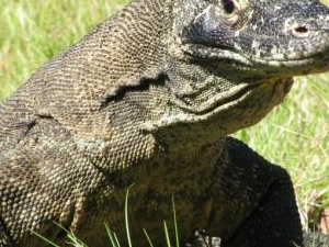 Komodo Tours Photos