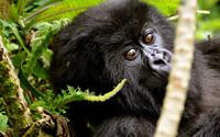 5 Days Gorillas Safari