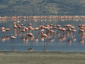 Exclusive Tours - Lake Natron Tour Photos