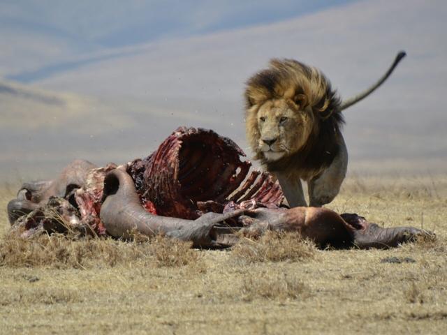 5 Days Manyara / Ngorongoro & Serengeti National Park Photos