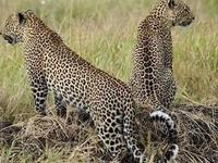Safari to Selous - Mikumi