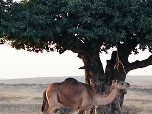 Discover Oman - Luxury Tour Photos