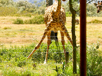 The Best of East Africa Safari - Kenya & Tanzania Safaris