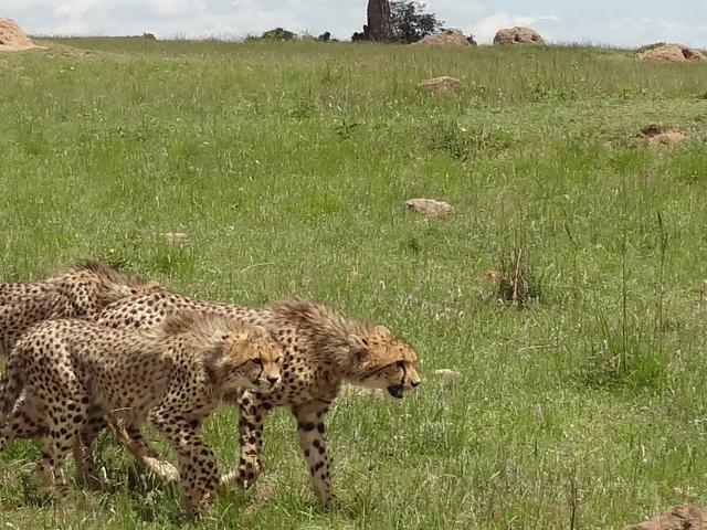 Budget Amboseli Safari Photos