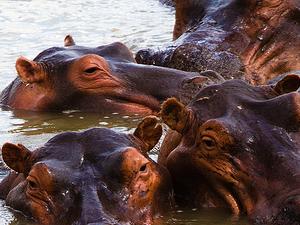 18 Days Combined Uganda - Rwanda Primate Safari Photos