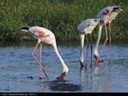 Amasa Safaris