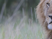 Maasai Mara Pre-Migration Safari