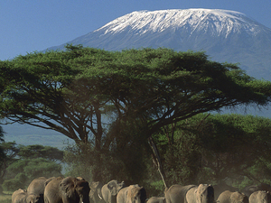 Amboseli, Lake Nakuru & Masai Mara Photos