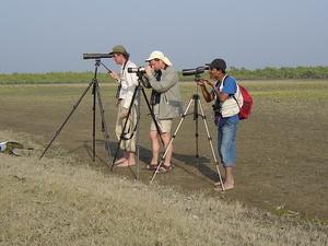 Migratory water Bird Watching in Cox's Bazar Islands, Bangladesh Photos