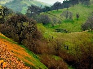 Valley of Flowers, Uttarakhand Photos