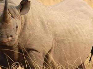 Adventure Kenya Safaris