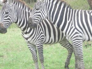1 day nairobi national park 150usd Photos