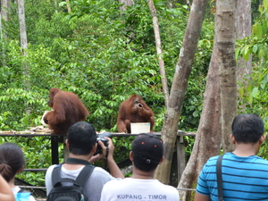 3 Days and 2 Nights Orangutan Tour (OT3) Photos