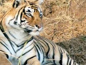 Rajasthan Wildlife Safari Tour Photos