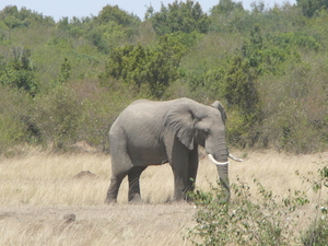 Amboseli National Park Tour Photos