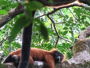 Marine Parks And Rainforest Lemurs Photos