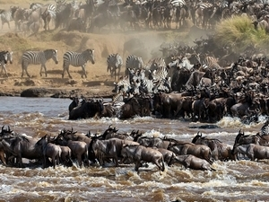 Wildebeest Migration Safari Photos