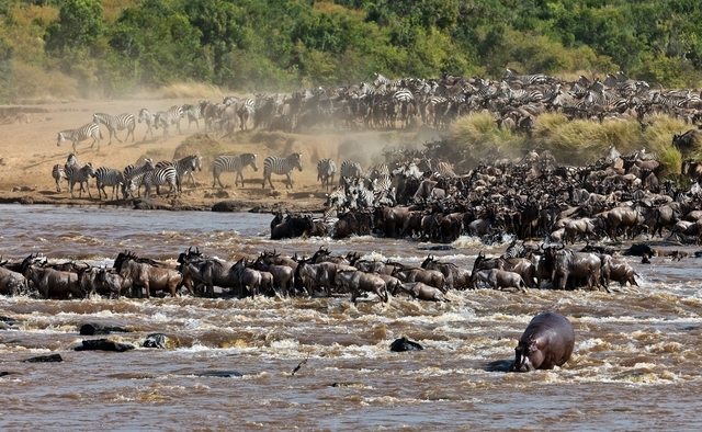 Wildebeest Migration Safari Photos