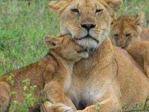 6 Days Amazing Safaris