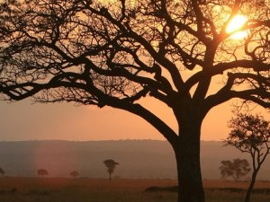 6 Days / 5 Nights in Selous Game Reserve & Mikumi National Park