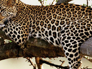3 Day Wildlife Safari - Queen Elizabeth National Park Photos