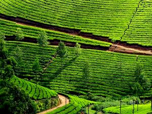 Charming Kerala Tour Photos