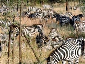 Serengeti Cultural, Wildlife & More