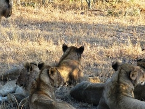 6 Days Serengeti Safaris Photos