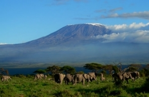 Classic Kenya Safari Photos