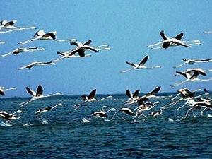 Cultural Tour : Puri - Konark - Bhubaneswar - Chilika Lake Photos