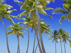 Simple Treasures of Fiji