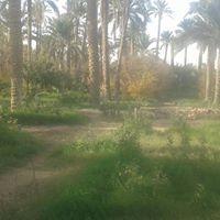 Abdelkader Khalfoun