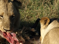 Magical Kenya Safari 10 Days valid till 30th OCT 2017