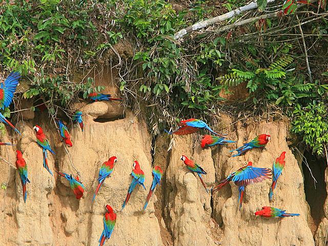 Manu Wildlife Center Photos