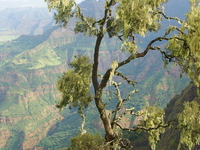 Simien Mountains National Park Trekking