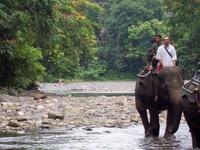 Bukit Lawang - Eco Culture