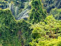 Bukit Lawang - Eco Trail
