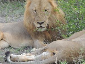 Selous safari Photos