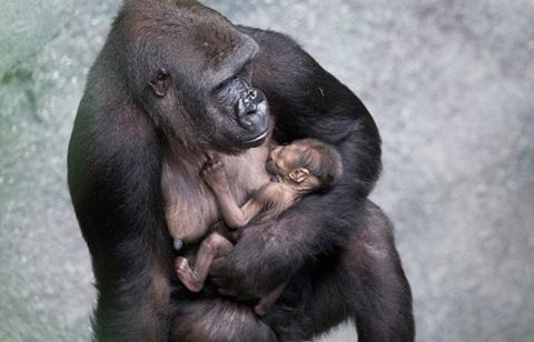 Rwanda Gorilla & Golden Monkeys Photos