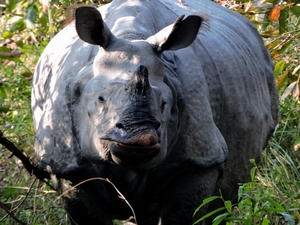 Kaziranga National Park - Assam